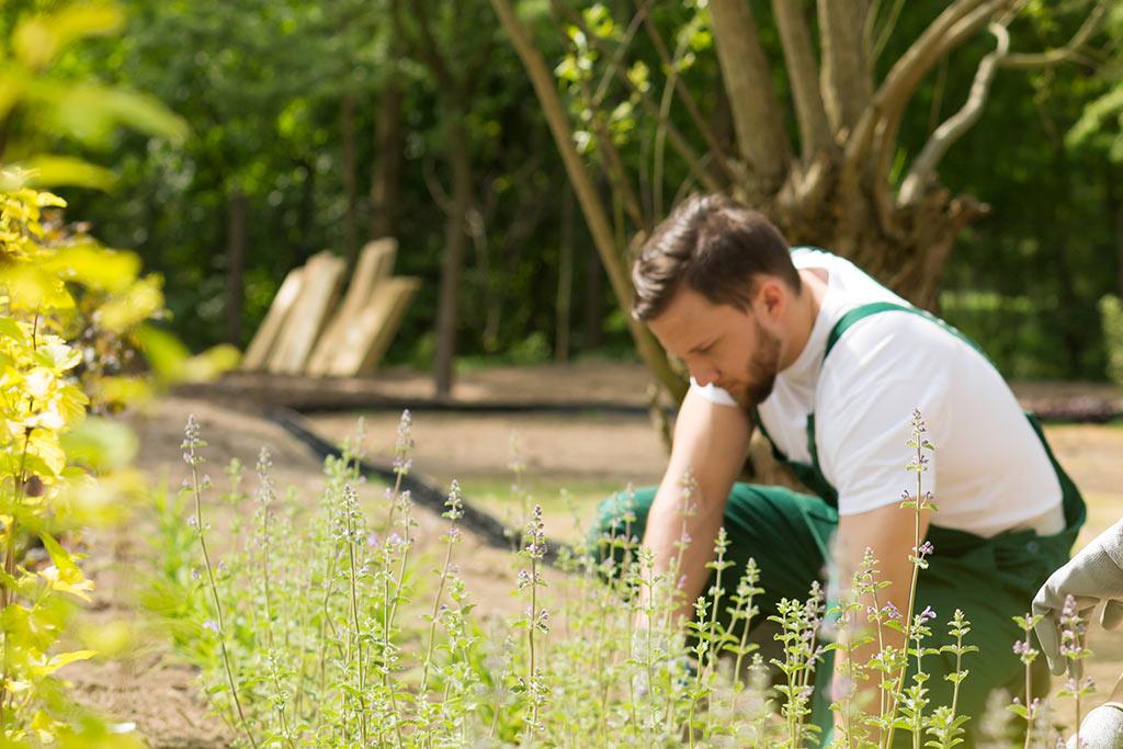 Facharbeiter Im Garten- Und Landschaftsbau (m/w)